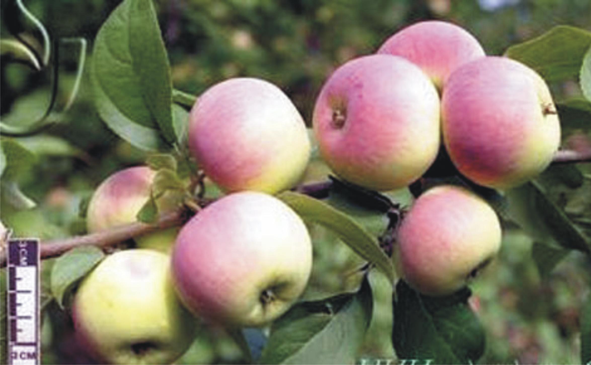 Грейпфрут выращивание в домашних